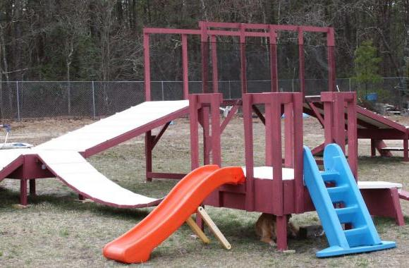 The only dogie jungle gym/play station in the USA!